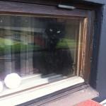 trassel i fönstret