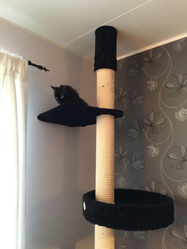 Kattklätterträd Eiffel Kattens no 1