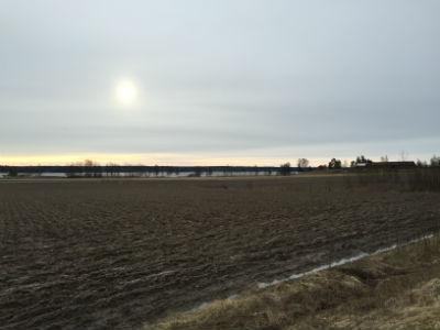 Alstern tidig morgon i mars