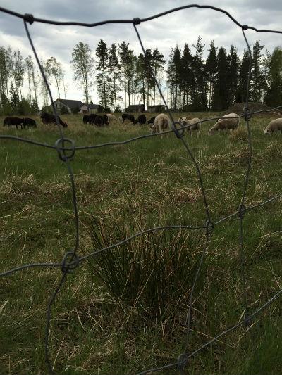 Får får får