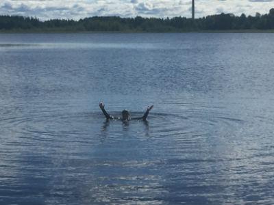 Simträning i Kroppkärrssjön 4